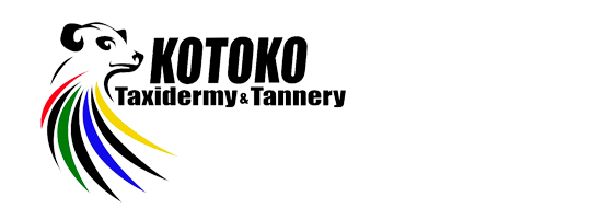Contact Kotoko Taxidermyand Tannery